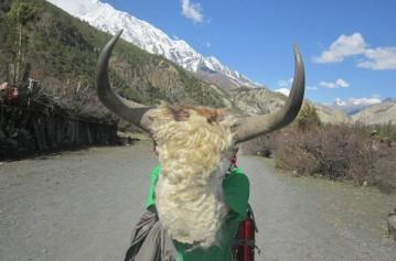 Nar Phu-Upper Mustang Trek